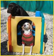 McHenry IL Dog Daycare